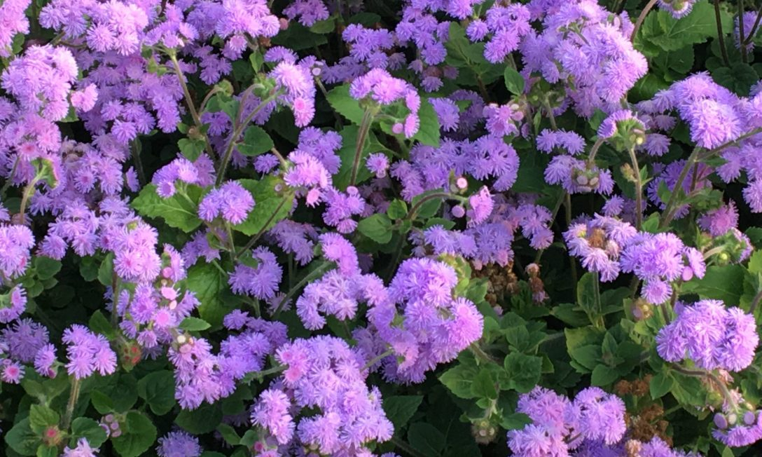 image of purple flowers on J. Wilder Bill's contact page