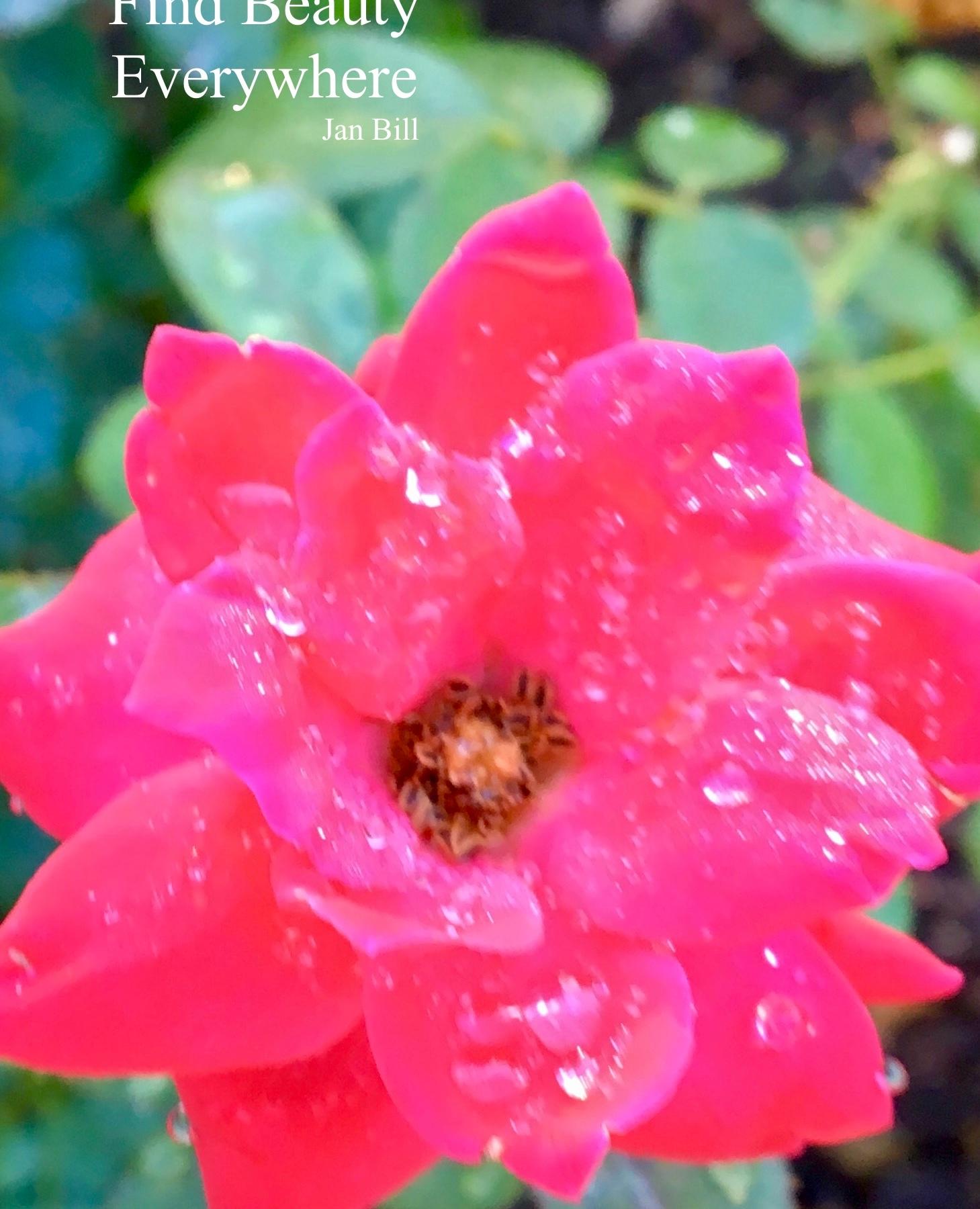 image of pink teacup rose