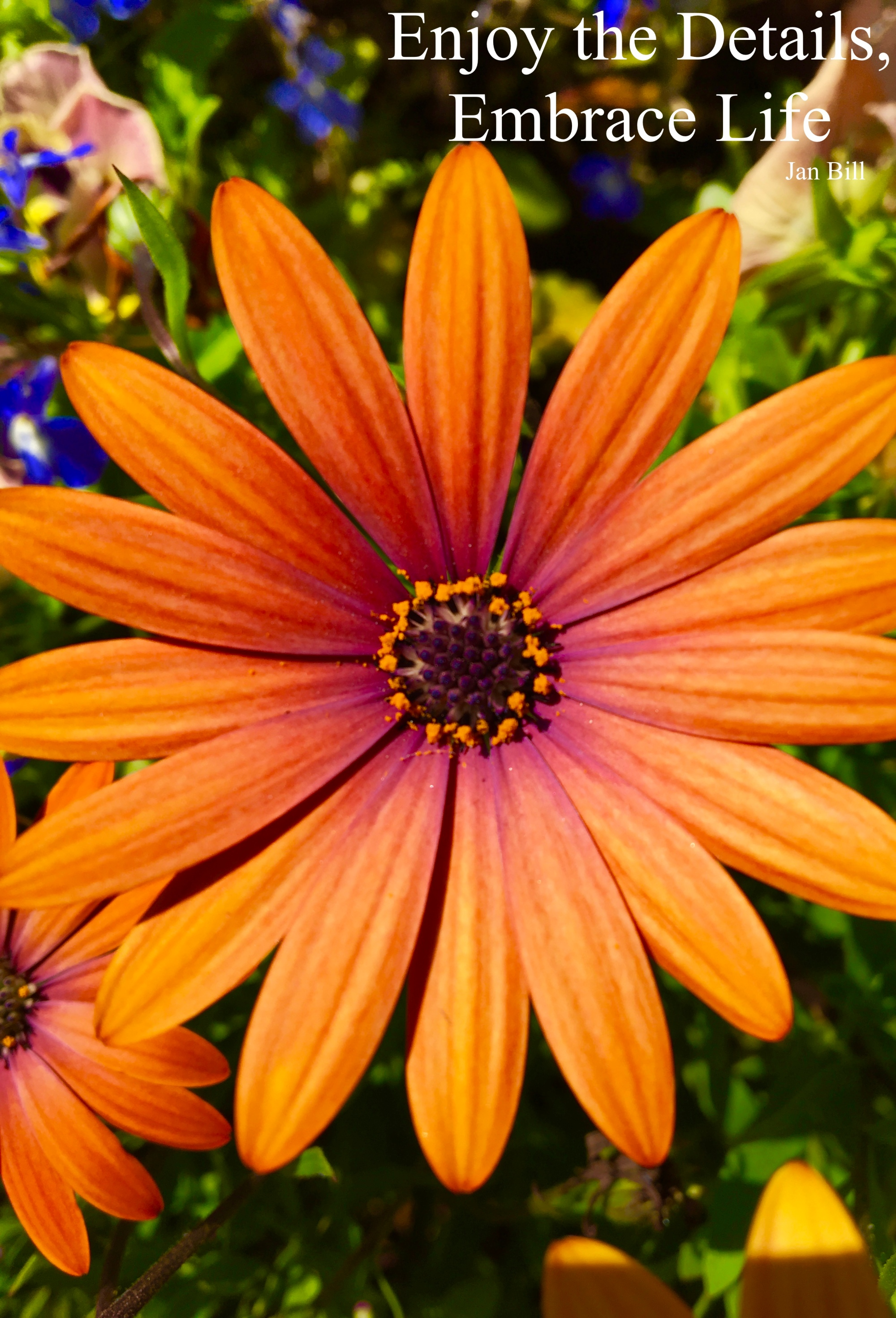 image of orange flower