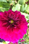 image of a pink flower