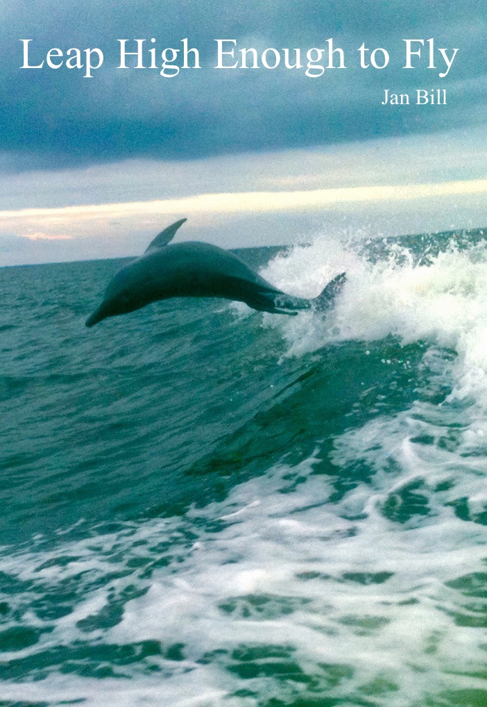 image of dolphin jumping the waves in Clearwater, Florida