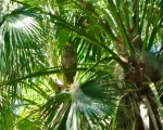 image of an owl in a palm tree