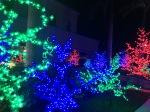 image of Japanese light trees